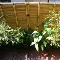 春:庭先の植物