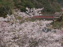 武田尾のシンボル赤い橋と桜