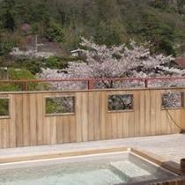露天風呂から見た見事な桜