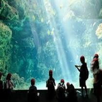 アクアマリン福島の水槽