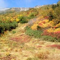 *秋の景色