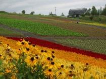 お花畑と外観