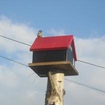 赤い屋根の小鳥のおうち