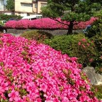 四季を感じる【庭園】