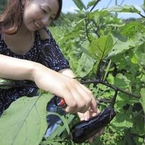 ■那須野ヶ原ファーム 野菜収穫