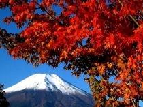 雪化粧の富士山と紅葉