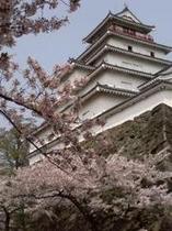 当館から車で25分、春の鶴ヶ城です。