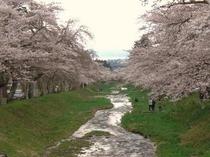 観音寺川の桜越しの猪苗代湖