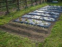 小さい菜園ですが暇を見つけて耕しています♪