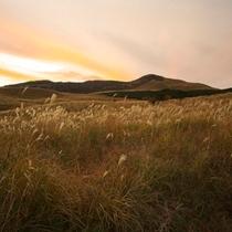 秋の細野高原のススキ