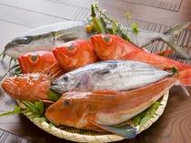 舟盛プランの地魚の一例※旬の地魚をたっぷり盛り込みます!!写真はワラサ・キンメ・オニカサゴ・カツオ・ホウボウ