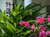 玄関には四季の花が咲きます。