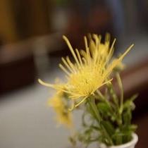 ◆四季折々の花