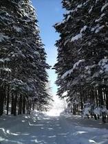 ニセコの冬景色