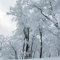 雪の季節もまた、幻想的