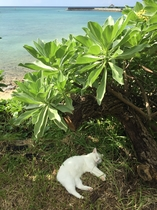 ビーチハウス猫