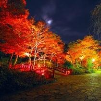 熱海梅園で期間中、夜はライトアップも行われ、その景色は息を飲むほど幻想的です