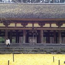 新宮熊野神社 長床(喜多方市)国の重要文化財に指定されており、樹齢600年の大イチョウの見ごたえは圧巻