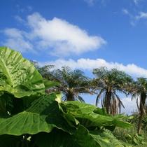 *【風景】沖縄でも自然が色濃く残っている西表島。時の流れがゆるやかに感じられます。