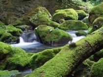 多賀町の渓流風景