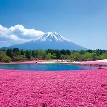 富士芝桜まつり(イメージ)