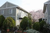 我が家の前の染井吉野