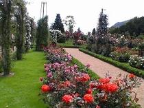 バガテル公園。バラが有名です。