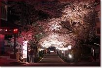 岳温泉〜桜坂〜ライトアップ