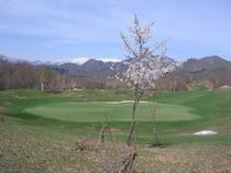 ゴルフコース6.jpg