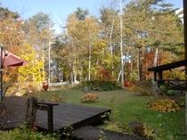 秋の庭 白樺林