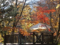 ステージ秋の様子