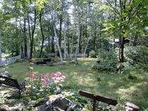 涼しげな夏の庭