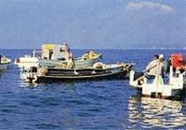 所有している定置網で、毎日新鮮な海の幸をお召し上がりいただけます!