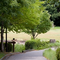 江汐公園のウオーキング道風景
