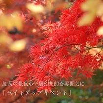 【10/14〜11/15まで】紅葉ライトアップ開催!