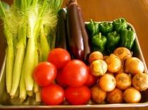 新鮮地物野菜