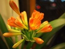 花 オレンジ