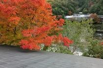 食事処屋上からの紅葉