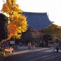 朝に境内の黄色く色づいたイチョウの木を眺めるのも・・・