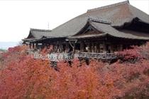 清水寺(徒歩約15分)朝のお散歩も楽しめます。