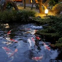 【水庭】目の前の水庭には約200匹の高級錦鯉が泳ぎ、より一層高級感を醸し出してくれます。