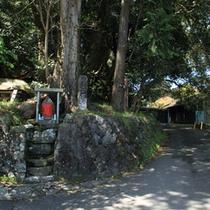 熊野高原神社の脇を歩くのもおすすめ。心地よい緑の中で深呼吸したくなります。