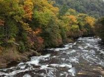 龍頭の滝。日光で一番早い紅葉です。