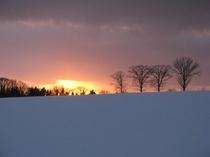 4本の木(冬)散歩の風景