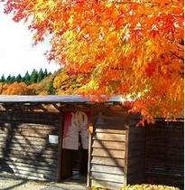 ◆お風呂と紅葉