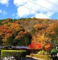 ◆紅葉の庭園