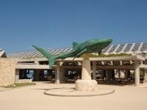 沖縄美ら海水族館(お車で3分)