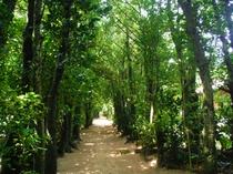 樹齢300年のふくぎ並木も徒歩1分