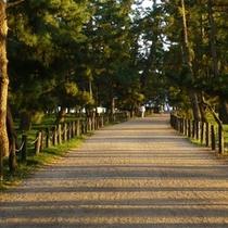 【松林の中の小路】エリア全体がパワースポットと言われる天橋立。歩きながら癒しのひと時をどうぞ