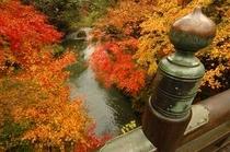 秋のこおろぎ橋より渓谷を望む